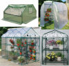Flower Plant Vegetable Popular Greenhouse