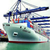 Reliable Shipping Forwarder in China for Oceania Shipment