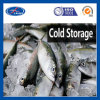 Cold Room Cold Storage Project Products Freezer Box