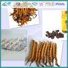 Cordyceps Sinensis Capsule Softgel (HCS-0042)