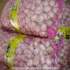 New Crop Garlic Fresh Garlic Price