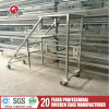Automatic H Type Layer/Broiler Chicken Egg Layer Cage Hot Sale