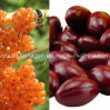 GMP, Top Organic Wild Sea Buckthorn Oil Capsule, Kill Cancer Cells, Protect Liver, Cardiovascular, Antioxidation, Prevent Alzheimer′s Disease