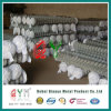 50*50mm 100*100mm Chain Link Fence (Galvanized and PVC Coated)