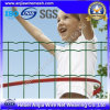 High Quality PVC Coated Holland Wire Mesh Fence with (CE and SGS)
