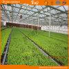 Long Life Span Polycarbonate Multi-Span Greenhouse