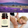 Private Label Organic Nature Lavender Oil