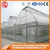 Agriculture Multi-Span Garden Plastic Film Greenhouse