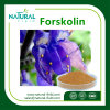 Forskolin Herbal Extract Healtch Care CAS: 66575-29-9