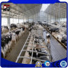 Steel Structure Buildings Daily Farm Shed for Cattle