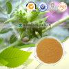 Tribulus Terrestris Extract 20% 40% Protodioscin / Saponins