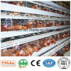 Full Automatic Chicken Farm Layer Chicken Cages System