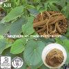 Natural Kavalactone Herbal Extract 70% / Kava Kava Extract Kavalactones