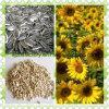2014 New High Quality Sunflower Seeds