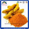 Turmeric Extact Powder Curcumin