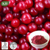 Cranberry Extract/Cranberry Powder; Proanthocyanidins 5%-60%, Anthocyanidins 10%-30%