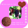 100% Natural Grape Seed Extract