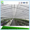 Arch Greenhouse for Vegetable Planting