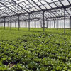 Hot Sale Commercial Glass Vegetable Greenhouse in China