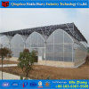 Low Cost Multi-Span Plastic Film Greenhouse for Agricultural