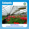 Hot Sale and Easily Installed Multi-Span Plastic-Film Greenhouse