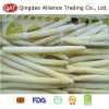 High Quality Frozen White Asparagus