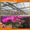 Auto environment Control Glass Greenhouse for Planting Flower