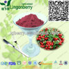 (US warehouse) Wild Lingonberry Juice Powder