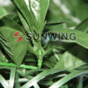 Sunwing Fire Proof Articial Boxwood Hedge