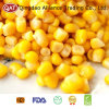 New Crop Sweet Corn Kernels with Top Quality