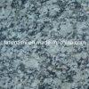 Discount White Tiger Skin Granite Tile for Flooring, Wall, Paving