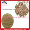 Professional Organic Szechwan Lovage Rhizome P. E with Good Quality