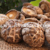 Dried Tea Flower Imitation Wood Mushroom
