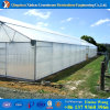 Agricultural Greenhouse for Cucumber