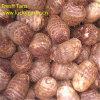 Professional New Crop Fresh Taro (60-80g)