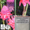 Kingherbs′ 100% Natural Zingiber Zerumbet Extract: Zerumbone 98%, 99% by HPLC