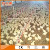 Modern Poultry Farming Equipment with Matching Prefab House Design Installation