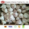 Top Quality Fresh Normal Garlic in Box