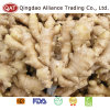 New Crop Fresh Ginger for Exporting