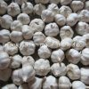 2017 New Crop Fresh Garlic with Carton Packing