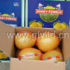 Fresh New Honey Pomelo 2