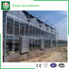 Polycarbonate Greenhouses for Vegetables/Flowers/Fruit