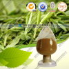 Green Tea Extract L-Theanine CAS: 3081-61-6