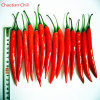 New Crop Good Quality Vegetable 4-7cm Chili