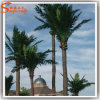 Outdoor Decorative Fiber Glass Artificial Coconut Palm Tree