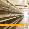 H Type full automatic equipment for modern controlled poultry farm shed