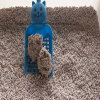 High Quality Bentonite Strip Cat Litter Manufacturer in China