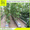 Hot Hydroponics Farming Greenhouse System for Direct Selling by Factory