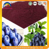 Blueberry Extract with 25% Anthocyanidins