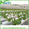 Nft Hydroponics for Lettuce, Herbas, Cabbage Greenhouse Growing